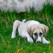 Puppy Has Diarrhea But Still Playful