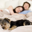 Why Does My Dog Sleep Between Me and My Husband?