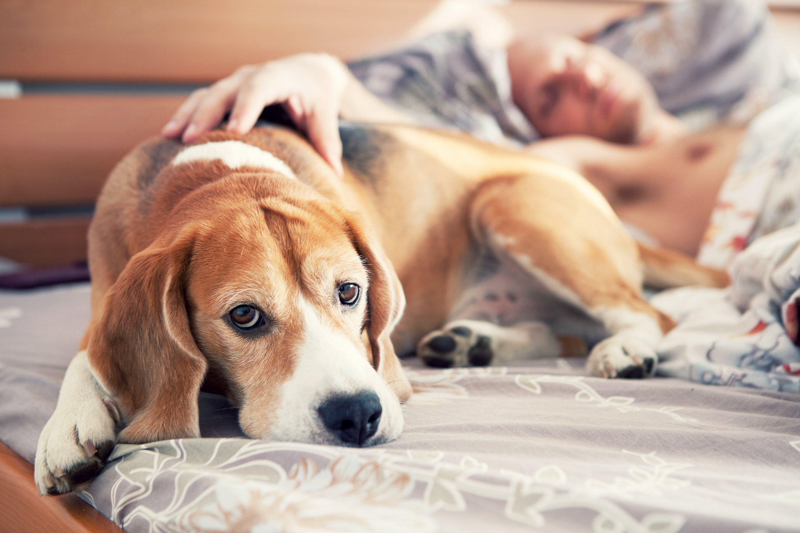 When To Euthanize A Dog With Kidney Failure 2021 Renal Put Down