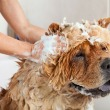 Is Dawn Dish Soap Safe For Dogs
