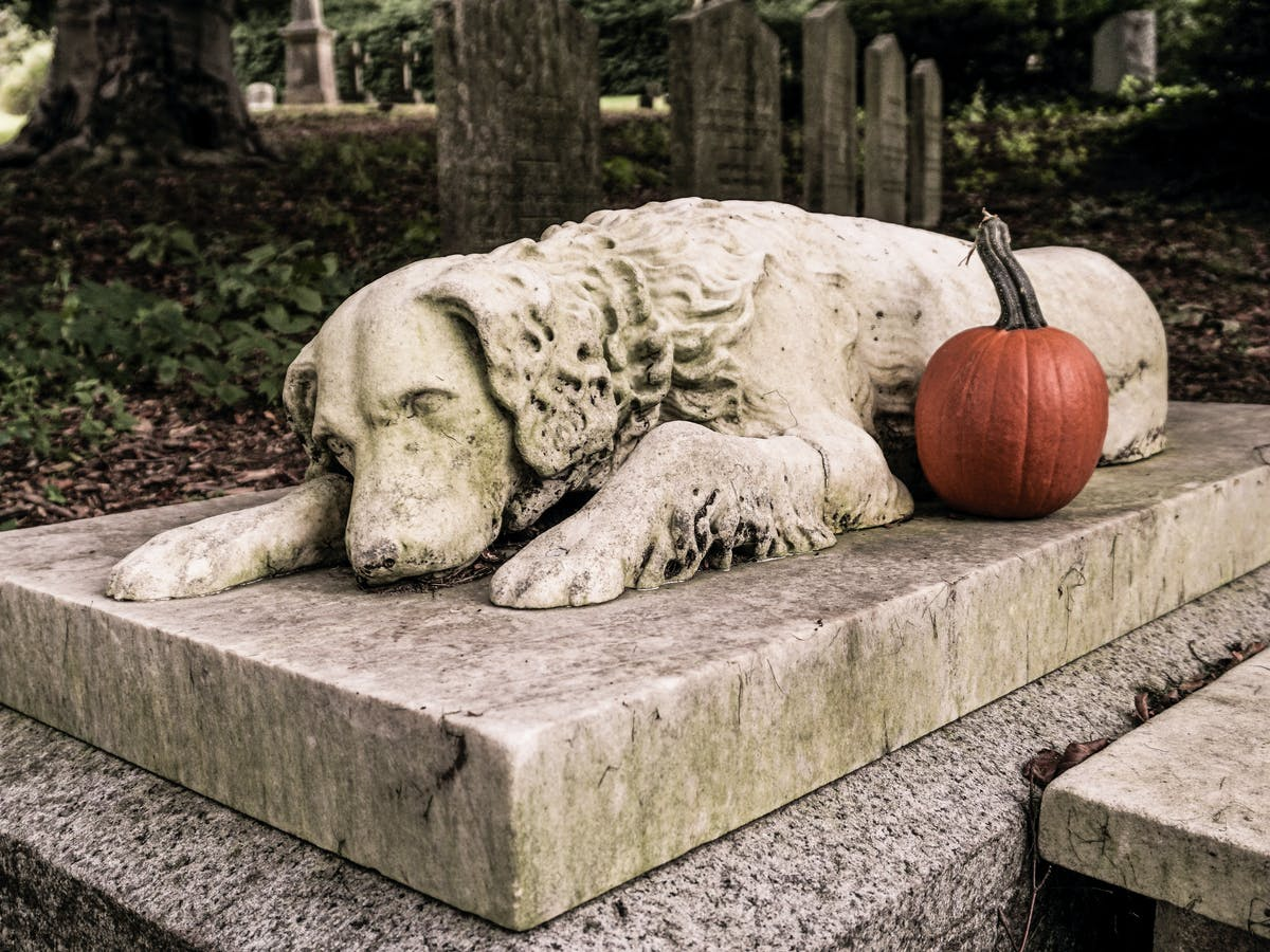 How Long Does It Take For A Buried Dog To Decompose [2021 ...