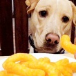 Can Dogs Eat Cheetos